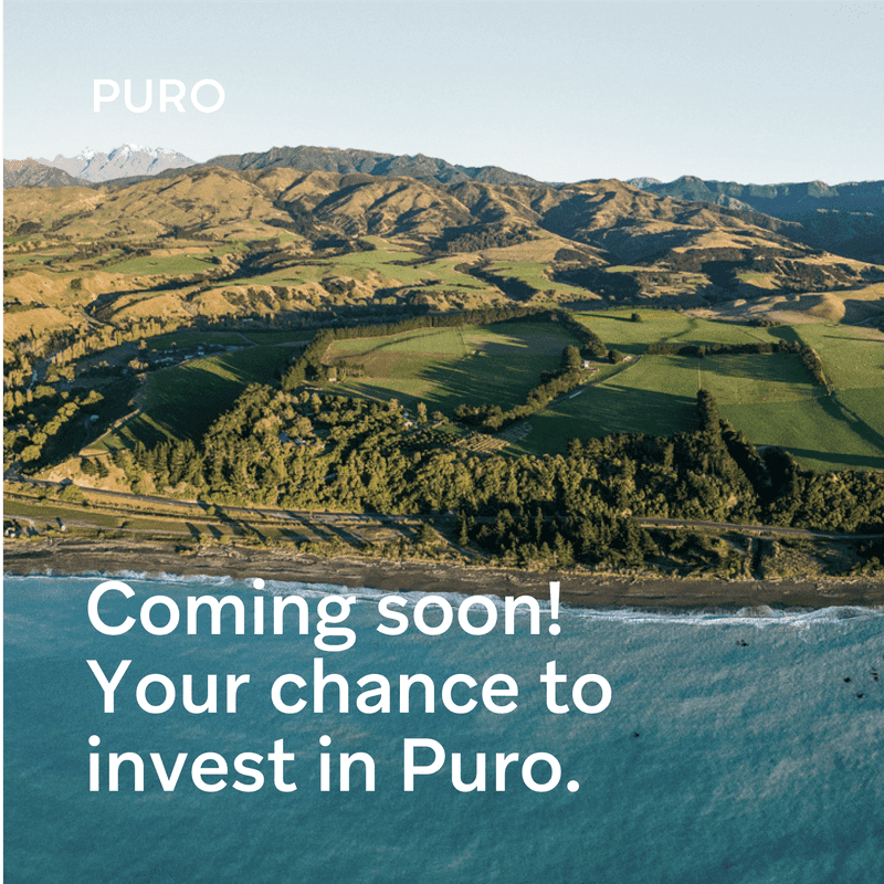 Puro set to grow again with second capital raise